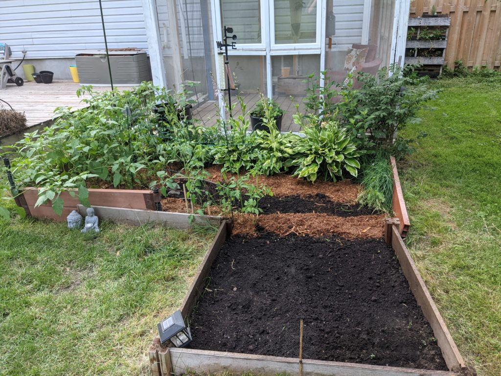 The same L-shaped bed after clean up. There is dark black soil in the clear areas, and cedar mulch lining the plants.